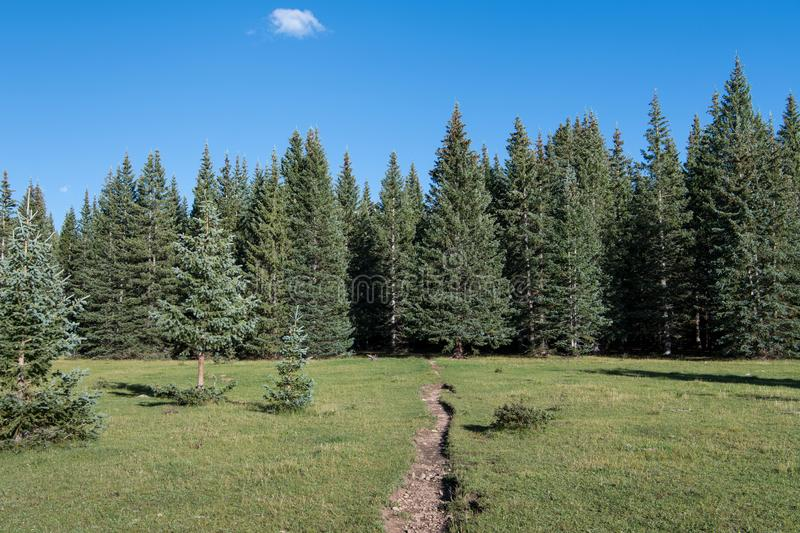 Hiking trail crossing a beautiful grassy alpine meadow towards a forest of spruce and fir trees under a blue sky royalty free stock photo