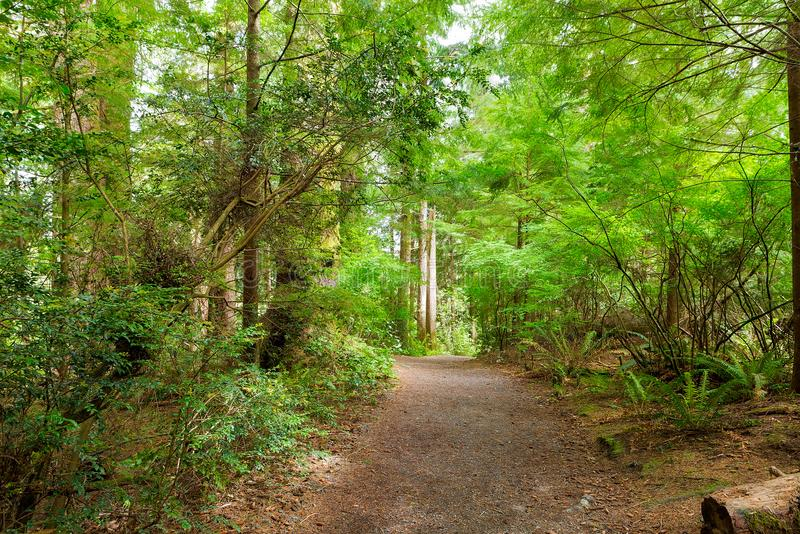 Hiking Trail through Forest along Lewis and Clark River. Hiking trail at Fort Clatsop in the lush green forest along Lewis and Clark River in Oregon royalty free stock photos