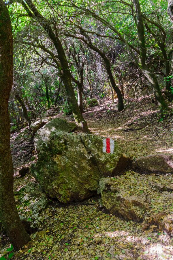 Hiking trail in the forest, on top of Mount Meron stock photography