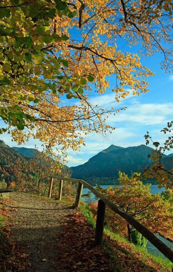 hiking trail in golden autumnal landscape, lake schliersee, bavaria stock photos
