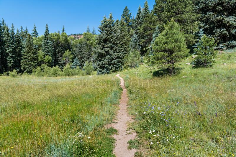 Hiking trail through an grassy alpine meadow dotted with wildflowers. Path through a meadow with wildflowers leading to spruce and pine trees in the Rocky stock photography