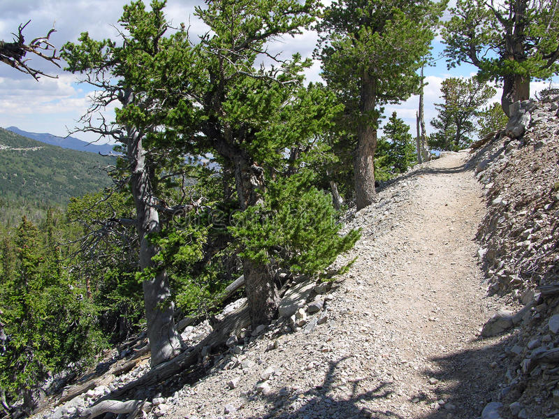 Hiking trail in the Great Basin National Park, Nevada stock photo