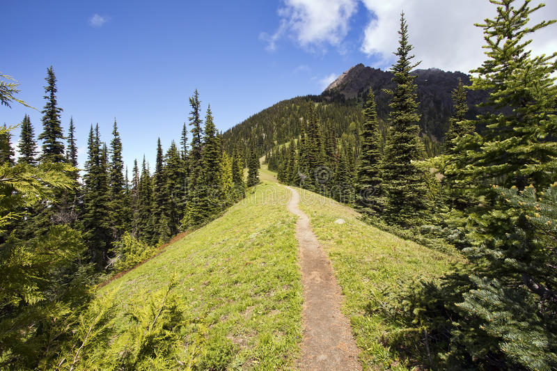 Hiking trail heads up a steep mountain ridge. A narrow hiking path heads through a pine forest, up a steep mountain ridge. Taken at Olympic National Park in stock image