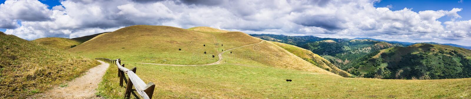 Hiking trail through the hills of south San Francisco bay area; cattle grazing on the hillsides; San Jose, California royalty free stock photos
