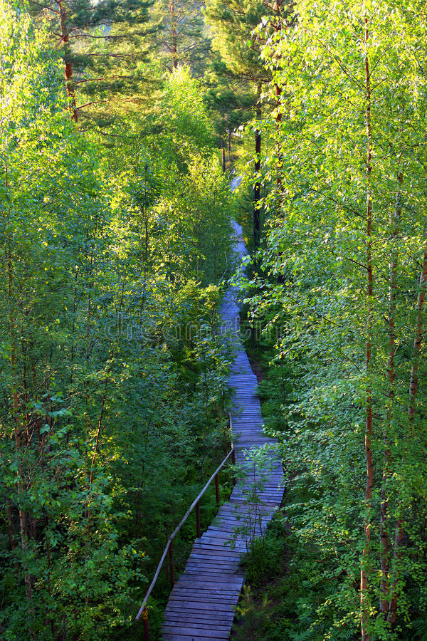 Hiking trail in late spring. Wooden hiking path is leading to bog, sunset at hand stock photography