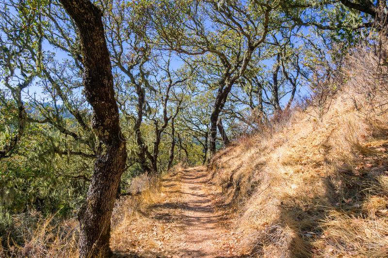Hiking trail lined up with oak trees. In Palo Alto Foothills Park, San Francisco bay area, California stock images