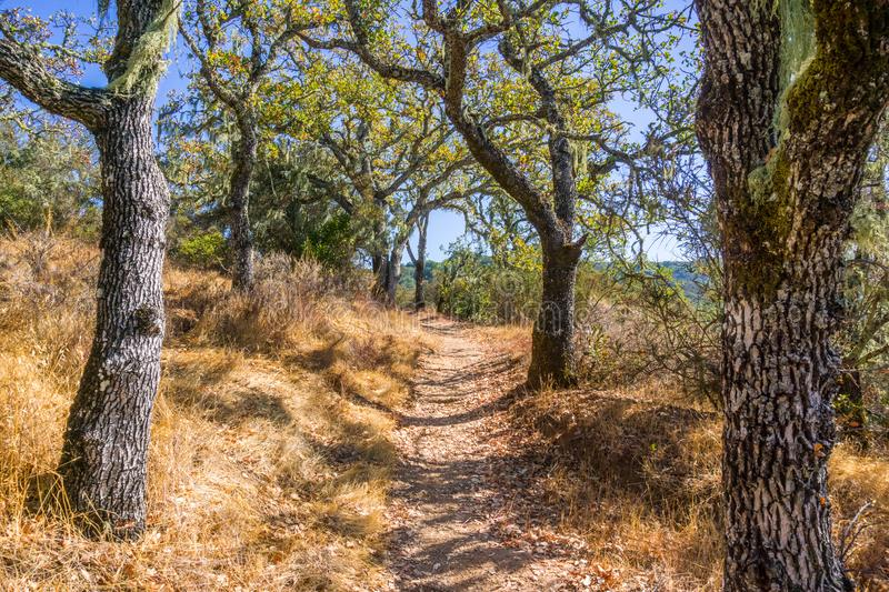 Hiking trail lined up with oak trees. In Palo Alto Foothills Park, San Francisco bay area, California stock image