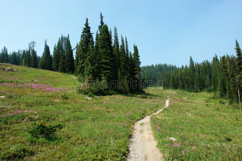 hiking trail in meadow stock photos