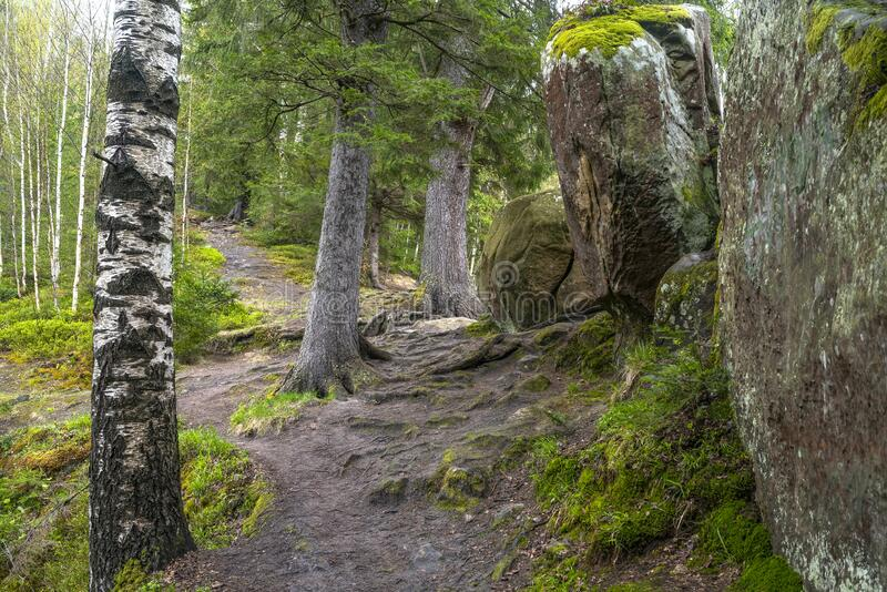 Hiking trail. Mountain path in forest between trees and rocks.  royalty free stock image