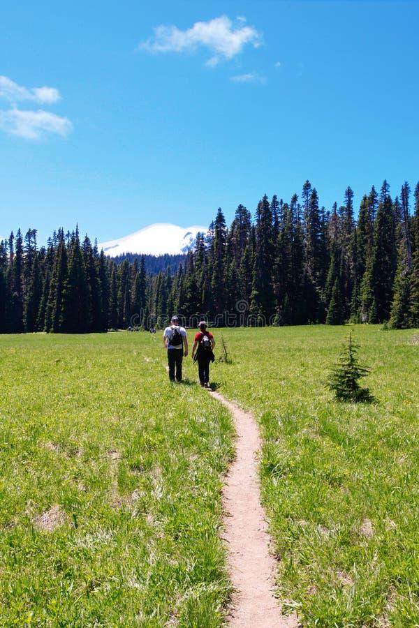 Hiking trail. Mt Rainer, Washington royalty free stock images