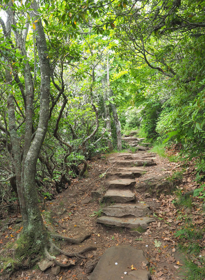 Hiking Trail off the Blue Ridge Parkway royalty free stock photo