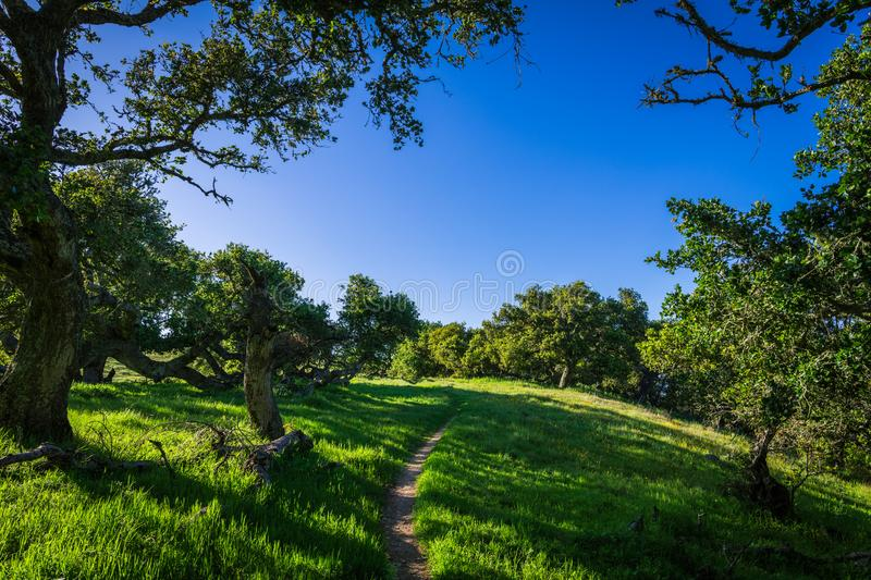A hiking trail passes through a summer landscape of lush green, grassy meadows and oak forest under a perfect blue sky stock image