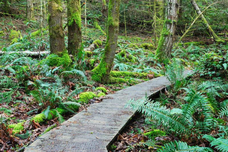 Hiking trail in rain forest. A winding hiking trail inside a rain forest, gulf islands national park, British Columbia, Canada stock images