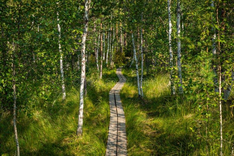 Hiking trail in scandinavian national park in a wetland bog. Kurjenrahka National Park. Turku, Finland. Nordic natural landscape.  stock photography