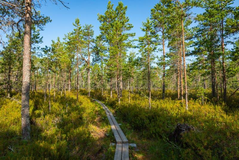 Hiking trail in scandinavian national park in a wetland bog. Kurjenrahka National Park. Turku, Finland. Nordic natural landscape.  royalty free stock photography