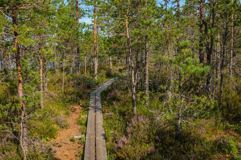 Hiking trail in scandinavian national park in a wetland bog. Kurjenrahka National Park. Turku, Finland. Nordic natural landscape.  royalty free stock photos