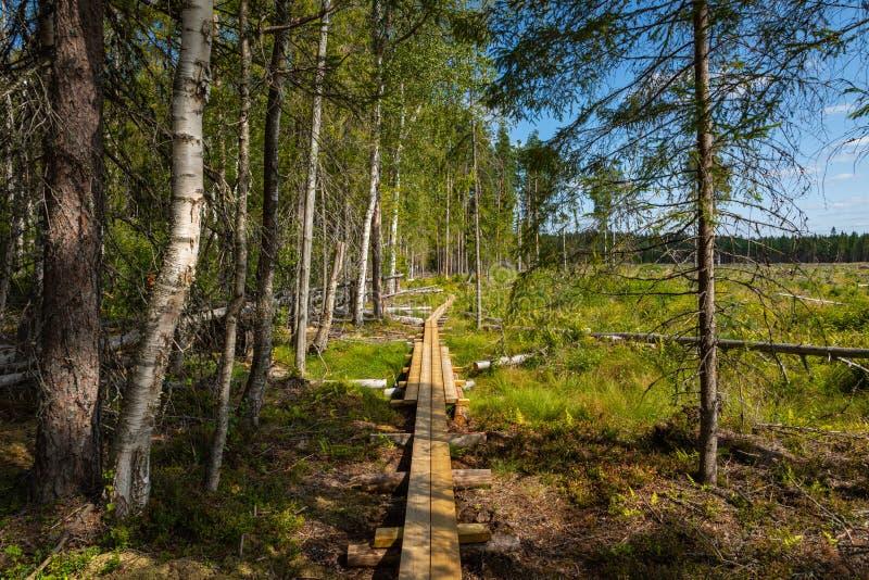 Hiking trail in scandinavian national park in a wetland bog. Kurjenrahka National Park. Turku, Finland. Nordic natural landscape.  royalty free stock photo