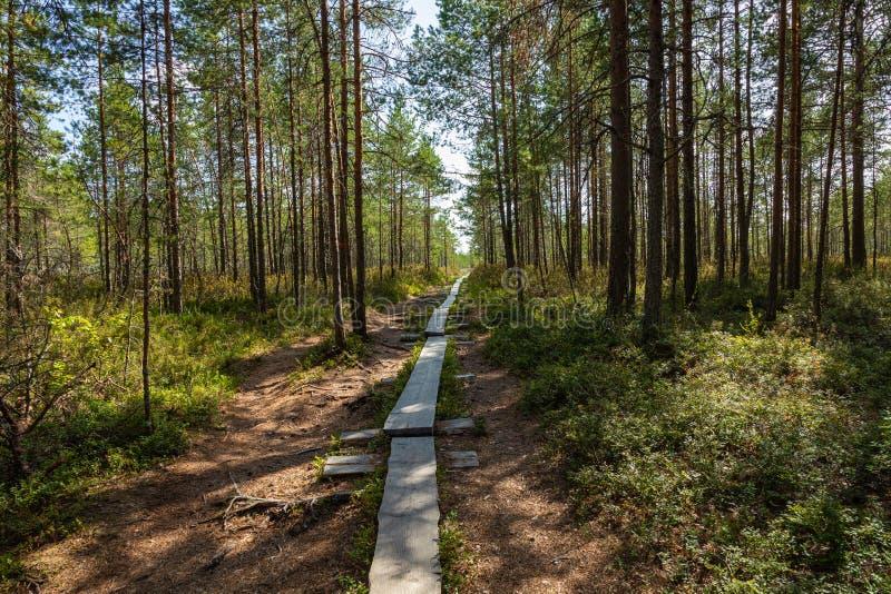 Hiking trail in scandinavian national park in a wetland bog. Kurjenrahka National Park. Turku, Finland. Nordic natural landscape.  stock photos