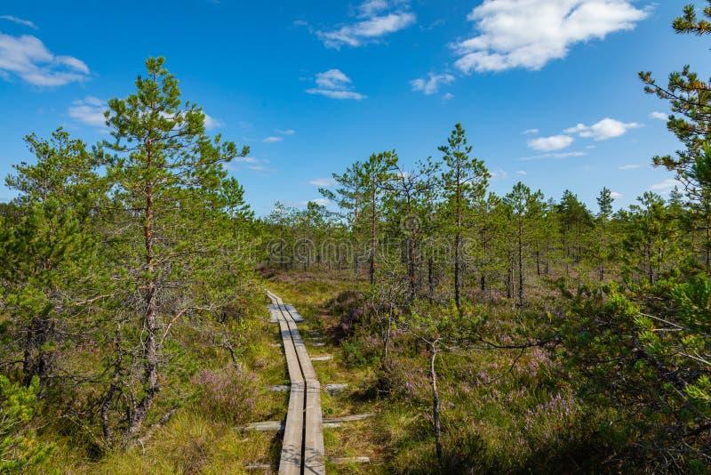 Hiking trail in scandinavian national park in a wetland bog. Kurjenrahka National Park. Turku, Finland. Nordic natural landscape.  stock photo
