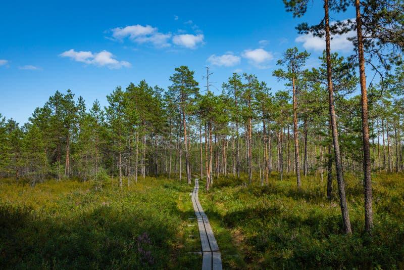 Hiking trail in scandinavian national park in a wetland bog. Kurjenrahka National Park. Turku, Finland. Nordic natural landscape.  stock image