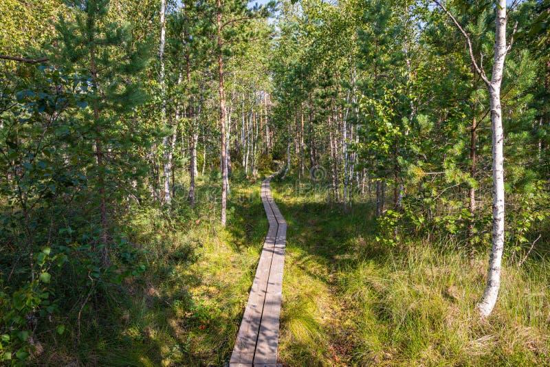 Hiking trail in scandinavian national park in a wetland bog. Kurjenrahka National Park. Turku, Finland. Nordic natural landscape.  royalty free stock image