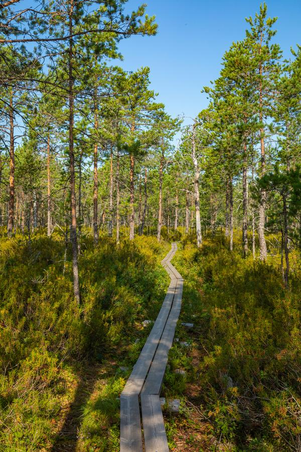 Hiking trail in scandinavian national park in a wetland bog. Kurjenrahka National Park. Turku, Finland. Nordic natural landscape stock photos