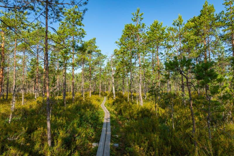 Hiking trail in scandinavian national park in a wetland bog. Kurjenrahka National Park. Turku, Finland. Nordic natural landscape.  stock images