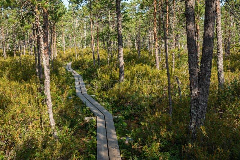 Hiking trail in scandinavian national park in a wetland bog. Kurjenrahka National Park. Turku, Finland. Nordic natural landscape stock images