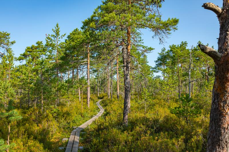 Hiking trail in scandinavian national park in a wetland bog. Kurjenrahka National Park. Turku, Finland. Nordic natural landscape royalty free stock photo