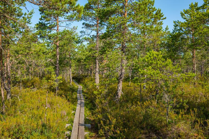 Hiking trail in scandinavian national park in a wetland bog. Kurjenrahka National Park. Turku, Finland. Nordic natural landscape royalty free stock photos
