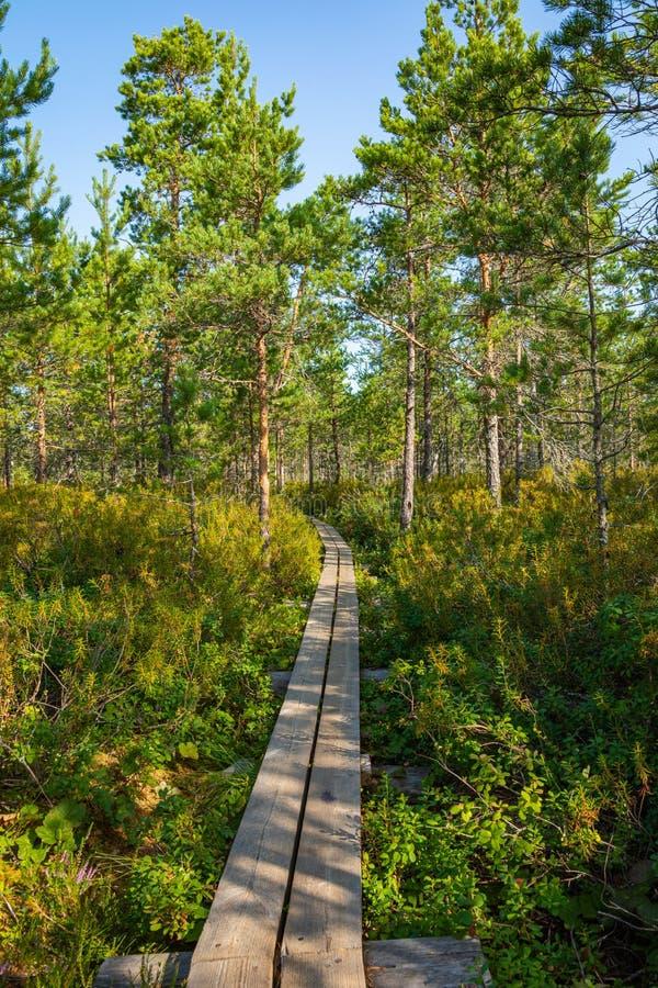 Hiking trail in scandinavian national park in a wetland bog. Kurjenrahka National Park. Turku, Finland. Nordic natural landscape stock photography