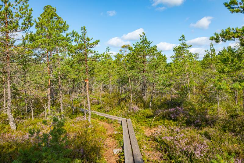 Hiking trail in scandinavian national park in a wetland bog. Kurjenrahka National Park. Turku, Finland. Nordic natural landscape.  royalty free stock images