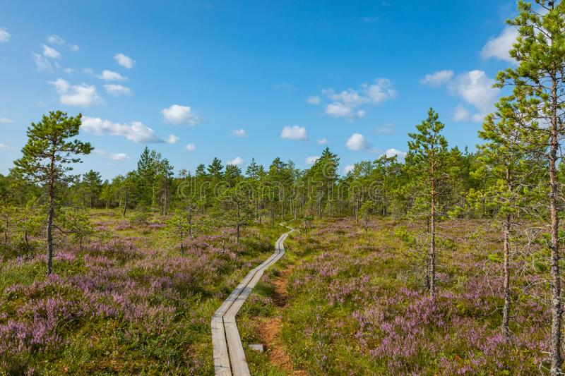 Hiking trail in scandinavian national park in a wetland bog. Kurjenrahka National Park. Turku, Finland. Nordic natural landscape stock images