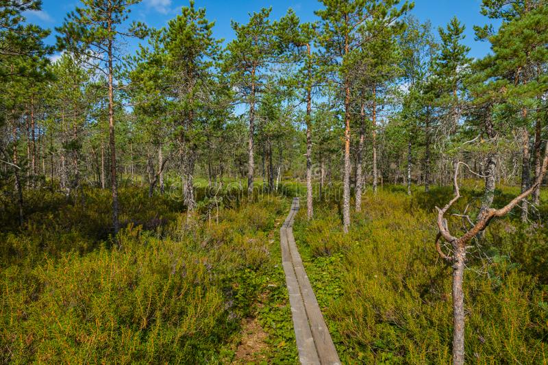 Hiking trail in scandinavian national park in a wetland bog. Kurjenrahka National Park. Turku, Finland. Nordic natural landscape stock image