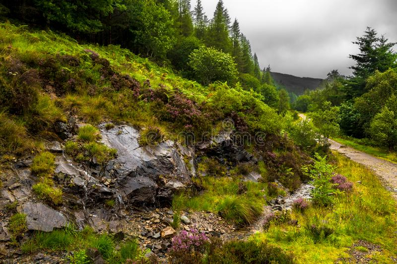 Hiking Trail Through Scenic Forest Landscape On The Isle Of Skye In Scotland royalty free stock photos