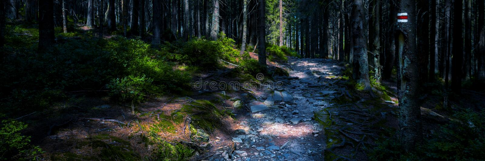 Hiking trail sign mark painted on a tree. Path leading trough the beautiful Bohemian Forest National Park. Banner. Hiking trail sign mark painted on a tree royalty free stock photos