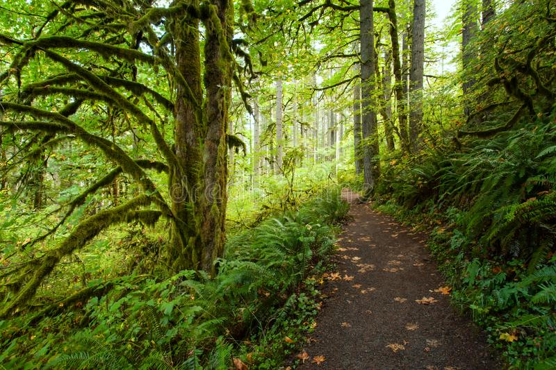 Hiking trail in Silver Falls State Park, Oregon in autumn stock photos