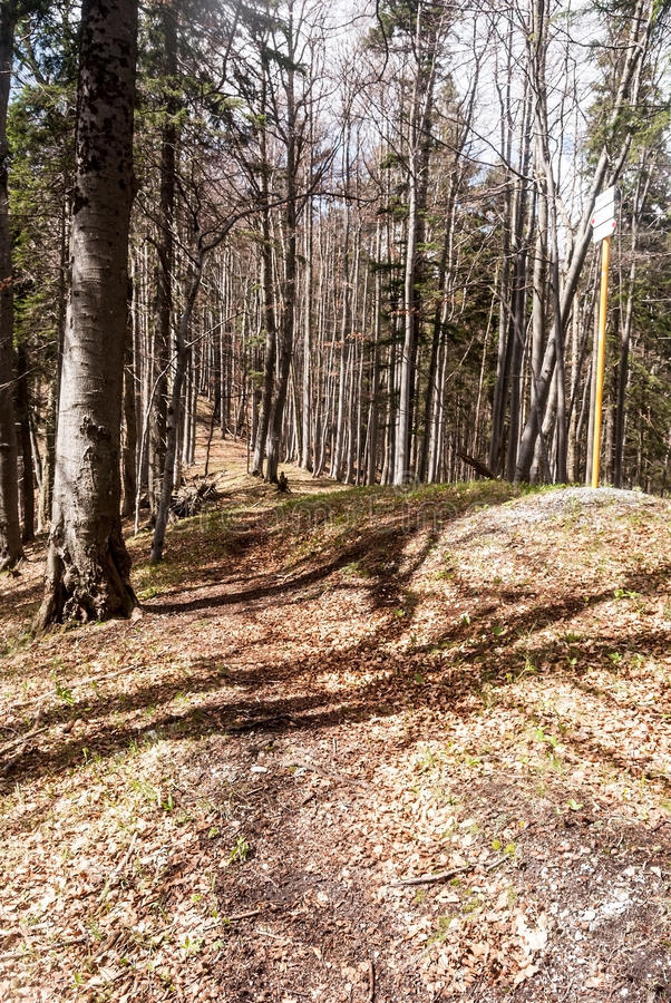 Hiking trail in spring mountain forest with guidepost in Slovakia royalty free stock photography