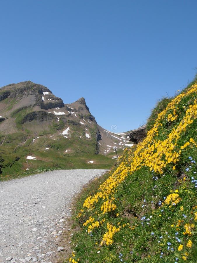 Hiking trail to bachalpsee switzerland royalty free stock image