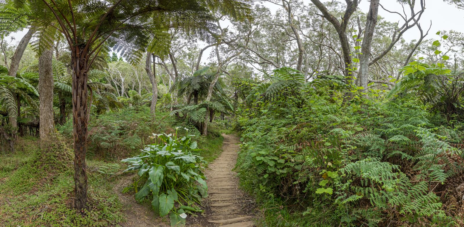 Hiking trail to canyon Trou de Fer at island La Reunion royalty free stock photography