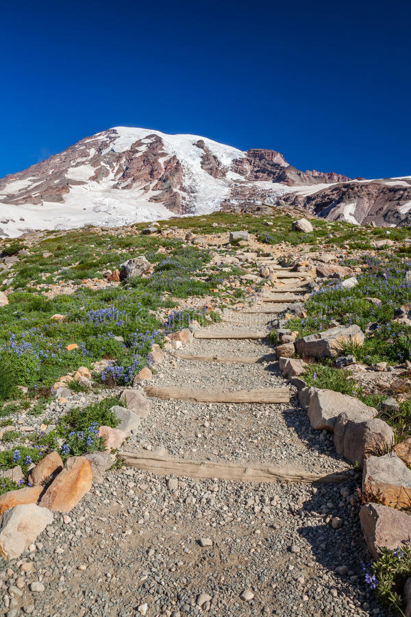 Download Hiking Trail To Mount Rainier Stock Photo - Image: 39373836
