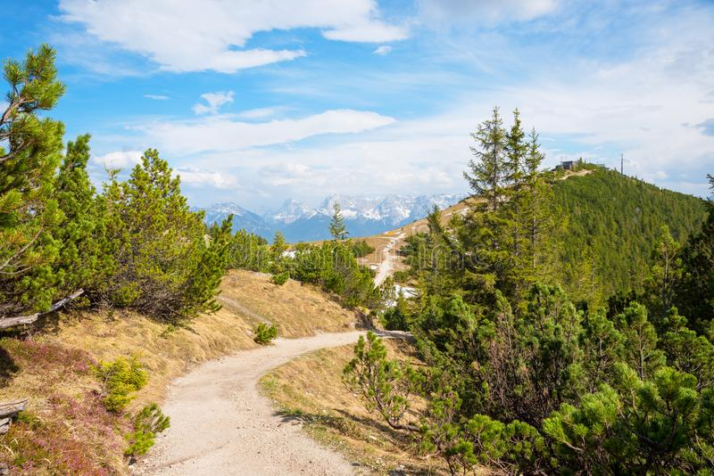Hiking trail to wank mountain summit and cable car station. Between conifer shrubbery stock image