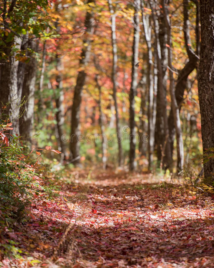 Hiking Trail in Tunnel of Trees in the Fall. With blurred background stock photography