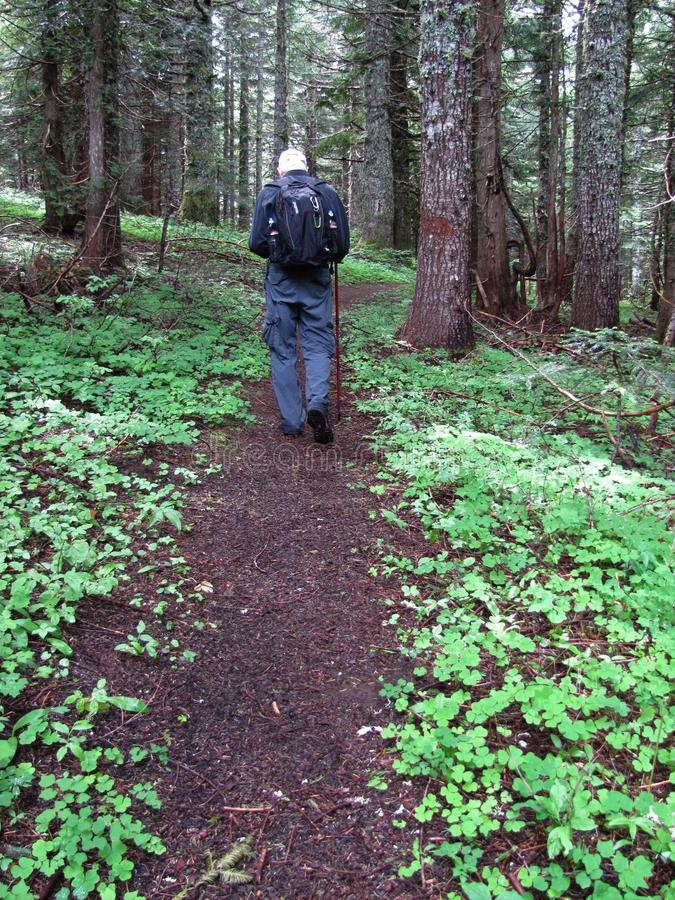 Hiking a trail through the woods n Oregon. A hiker with his back to the camera traveling along the trail through the forest in Oregon royalty free stock image