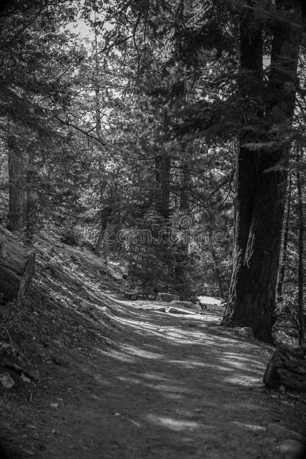 Hiking Trails royalty free stock photography