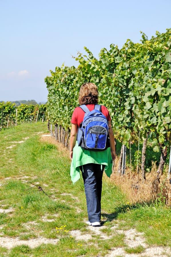 Hiking through vineyard royalty free stock images