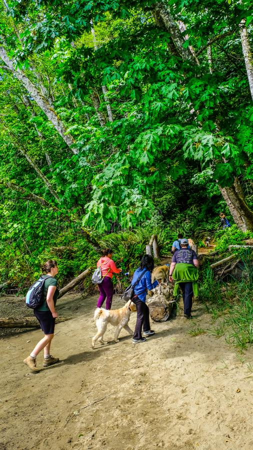 Hikers And Their Dogs Hiking The Trail At Tolmie State Park On A Very Nice Pacific Northwest Puget Sound Late Spring Afternoon. South Washington United States stock images