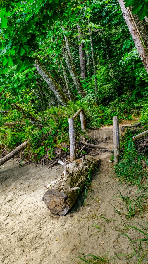 Hiking Trail Being Block By A Fallen Tree Trunk In A Green Lush Sand Beach Rain Forest In The Pacific Northwest stock photos