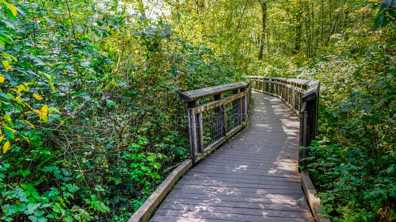 Boardwalk Build For Hiker Hiking The West Hylebos Wetlands Park , Federal Way, Washington, United States. The boardwalk made sure hikers stay dry even when the royalty free stock photo