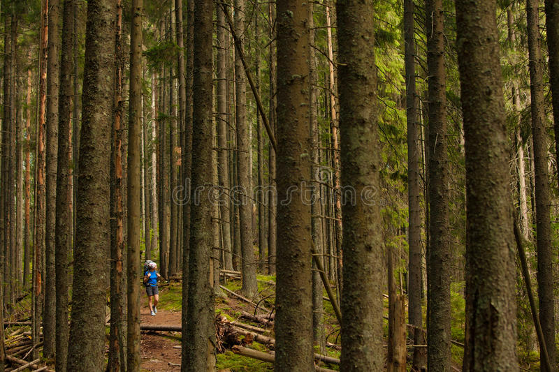 Download Hiking stock image. Image of tree, girl, outdoors, active - 33409611